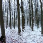 Alle årstider har sin charme - her vinteren